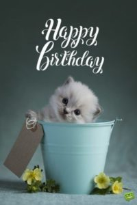 Happy Birthday Wishes Cute Cat